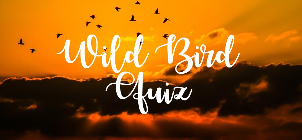 Wild Bird Month – Take the quiz!