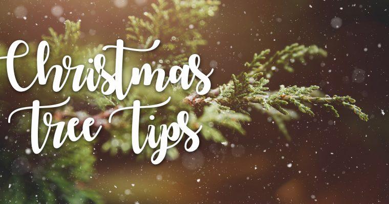 Keeping Your Christmas Tree Fresh!