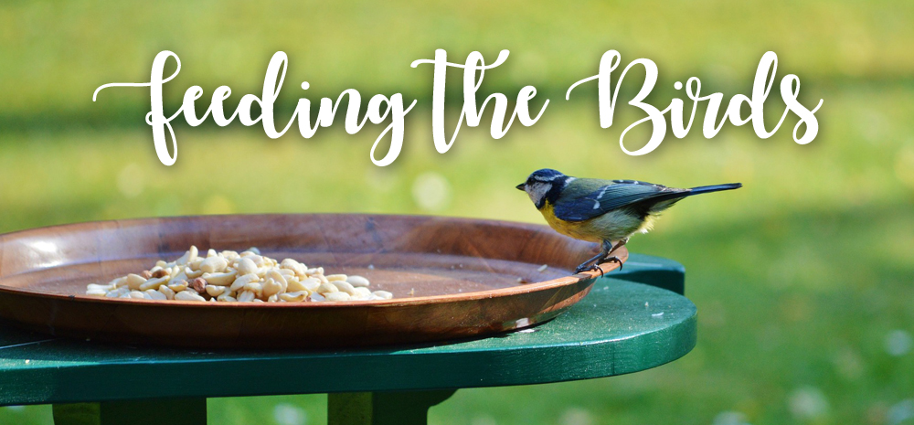 #askUpCountry: What should I feed the birds in my garden?