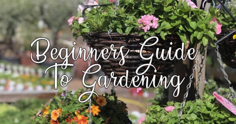 Beginners Guide To Gardening