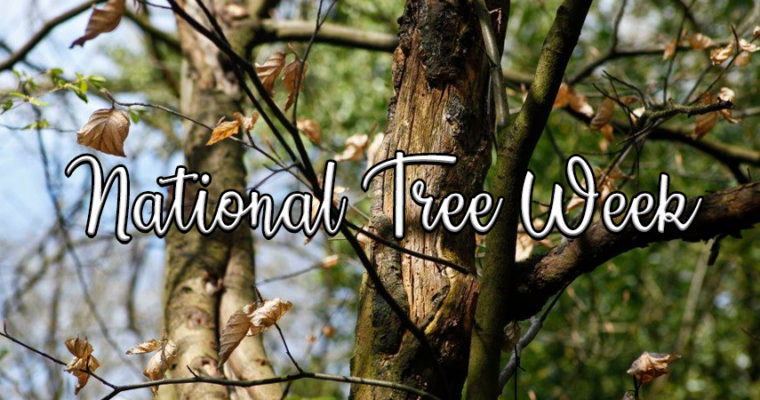 UpCountry Garden Centre Supports National Tree Week