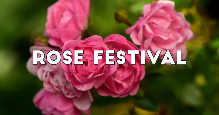 Our Rose Festival is On!