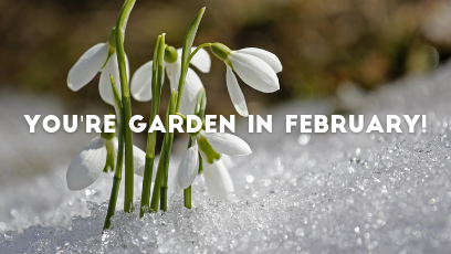 Your own February checklist for a perfect garden!