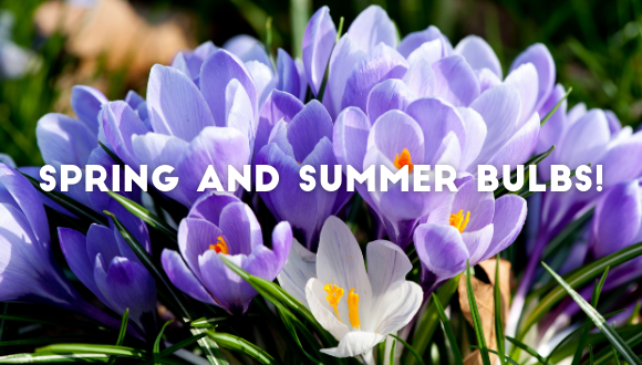 All you need to know on spring and summer bulbs!