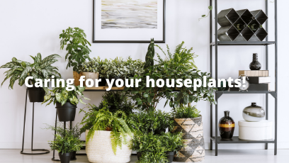 How to keep you indoor plants alive during these cold temperatures!