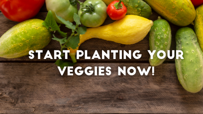 The perfect guide for home grown veggies
